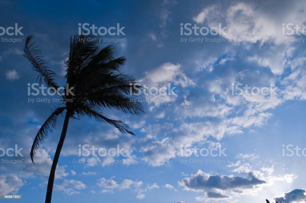 Palme im Morgengrauen blowing in wind Lizenzfreies stock-foto