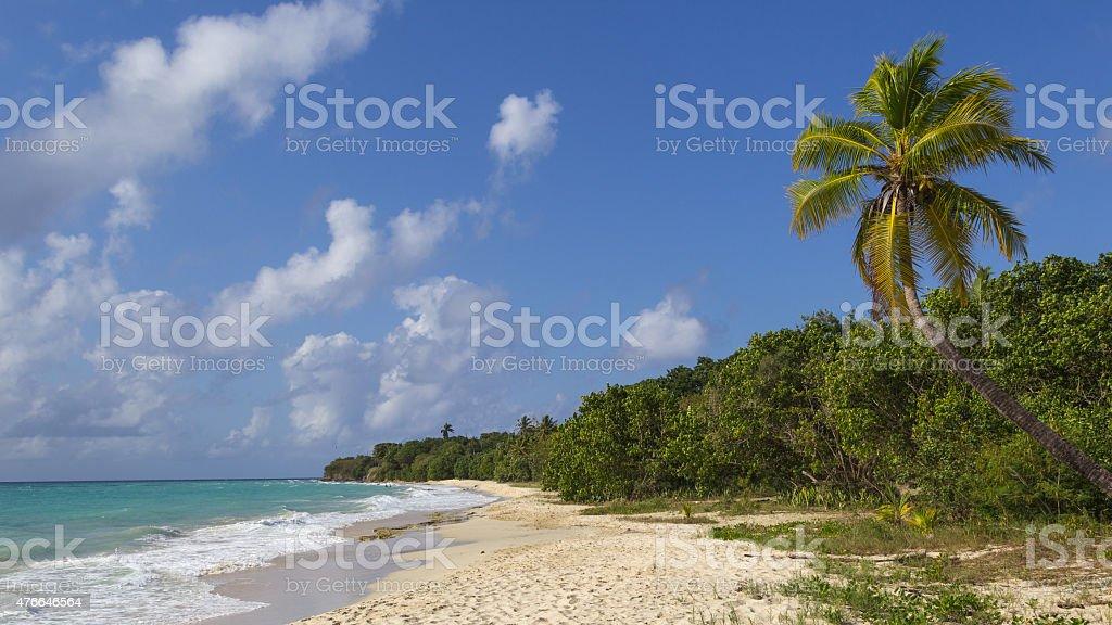 Palm tree at empty white sandy carribean beach, St. Croix stock photo