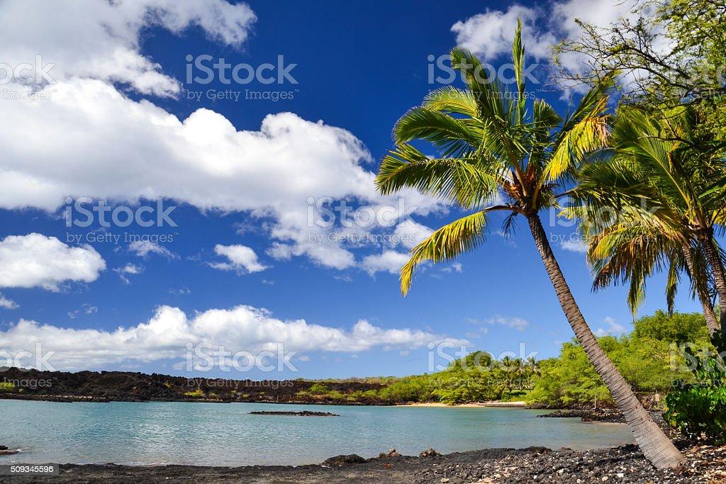 Palm tree at La Perouse Bay - Makena, Maui, Hawaii stock photo