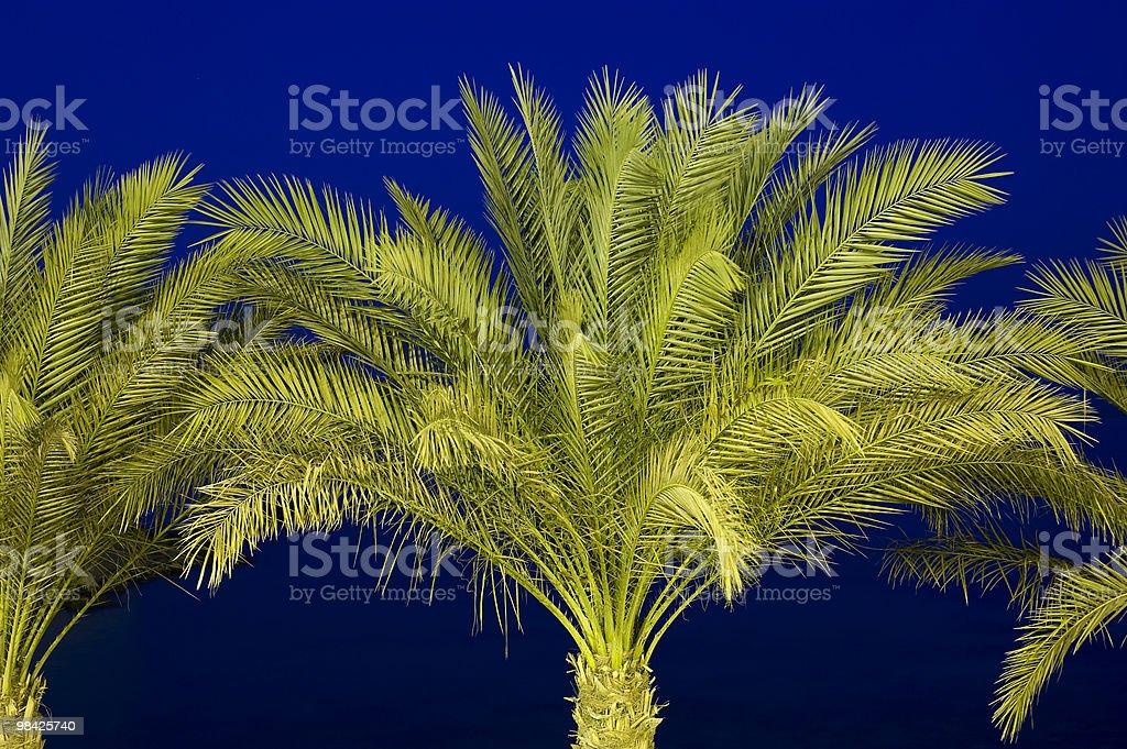 Palm tree at night royalty-free stock photo