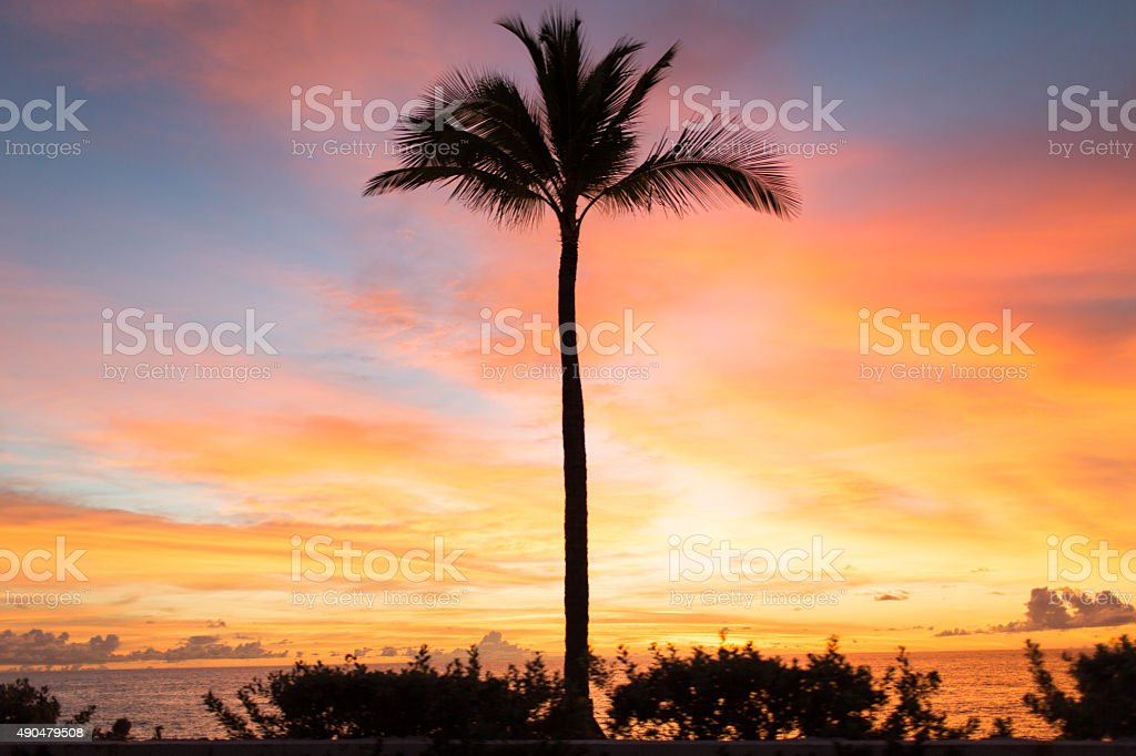 Palm Tree at Sunrise stock photo