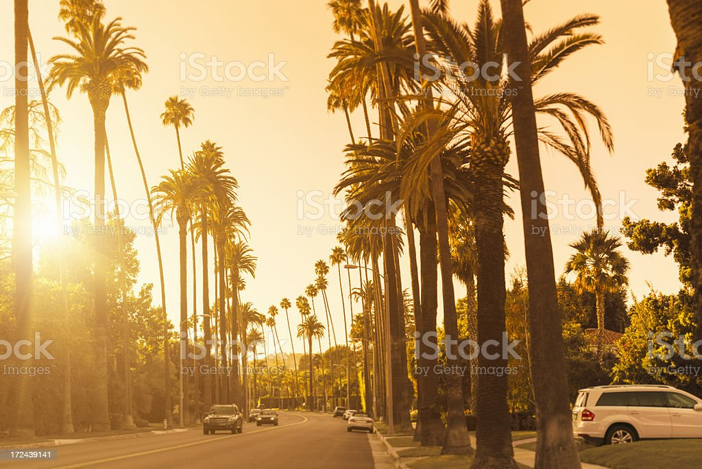 Palm tree at sunset in Canon Drive Hollywood stock photo