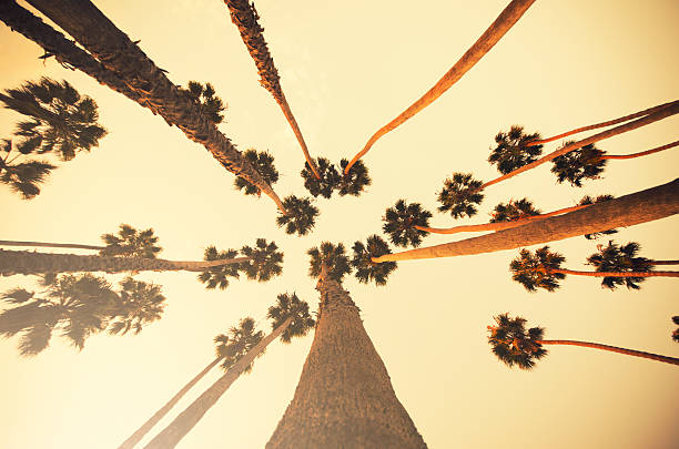 Palm tree at sunset on Beverly Hills, California - USA http://blogtoscano.altervista.org/LA.jpg  sunset boulevard los angeles stock pictures, royalty-free photos & images