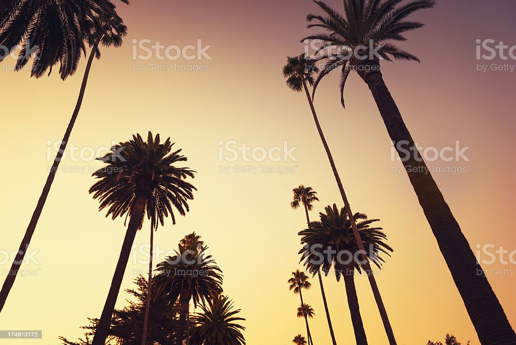 Palm tree at sunset on Beverly Hills, California - USA royalty-free stock photo