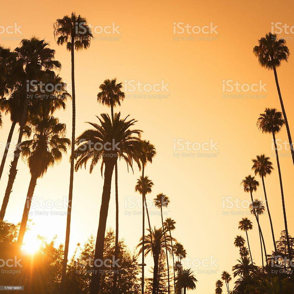 Palm tree at sunset on Beverly Hills, California - USA stock photo