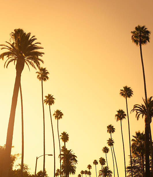 Palm tree at sunset on Beverly Hills, California - USA  sunset boulevard los angeles stock pictures, royalty-free photos & images