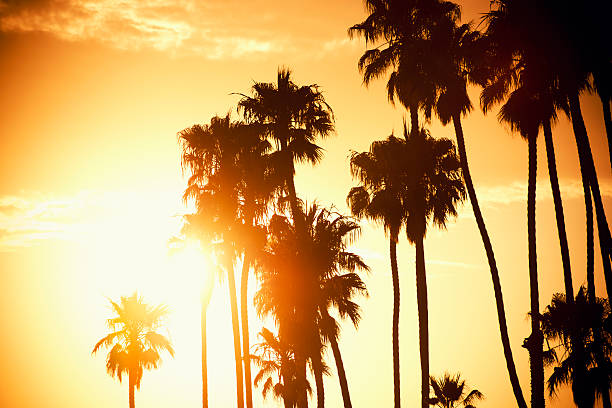 Palm tree at sunset on California - USA  santa barbara california stock pictures, royalty-free photos & images
