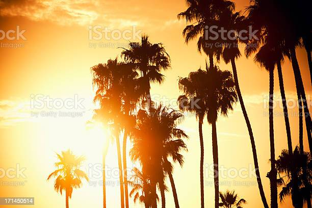 Palm Tree At Sunset On California Usa Stock Photo - Download Image Now