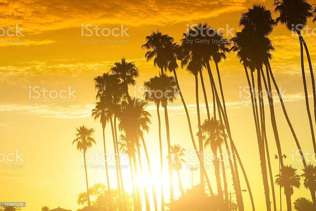 Palm tree at sunset on california - USA stock photo