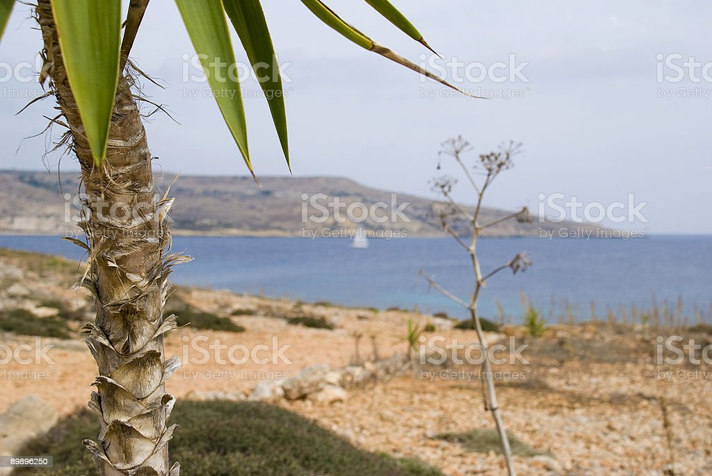 Palm tree at the Blue Lagoon royalty-free stock photo