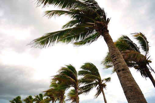 Palmy W Huragan - zdjęcia stockowe i więcej obrazów 2015