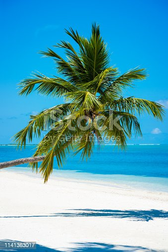 Photogenic palm tree at tropical paradise beach in Maldives, Addu City, Herathera island, Addu atoll (former Seenu Atoll), Maldives. Luxury travel holidays background. Property released. Photo taken by Sony a7R II, 42 Mpix.
