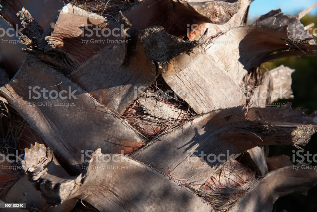 Palm tree bark background. Palm tree bark texture - Royalty-free Abstract Stock Photo