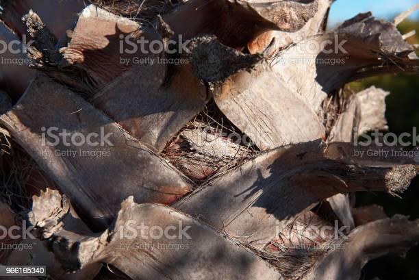 Sfondo Corteccia Di Palma Texture Della Corteccia Di Palma - Fotografie stock e altre immagini di Albero