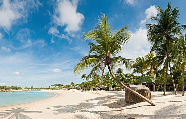 Palm tree beach resort Insel Sentosa, Singapur – Foto