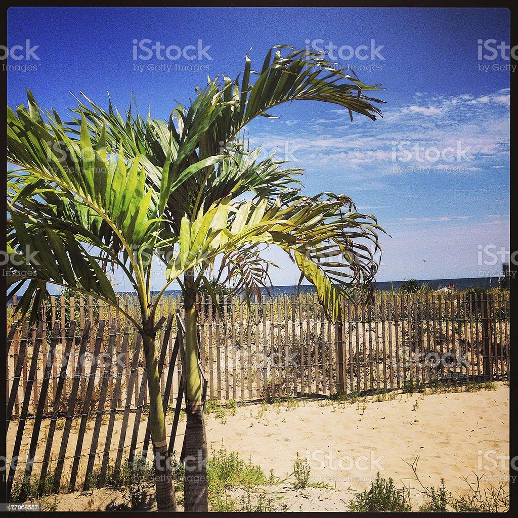 Palm Tree Beach Scene royalty-free stock photo