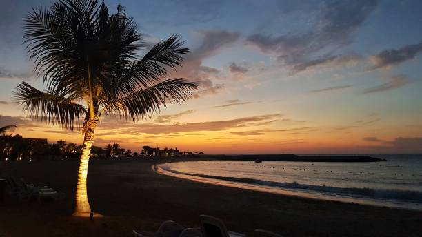 Sonnenuntergang am Palmen – Foto
