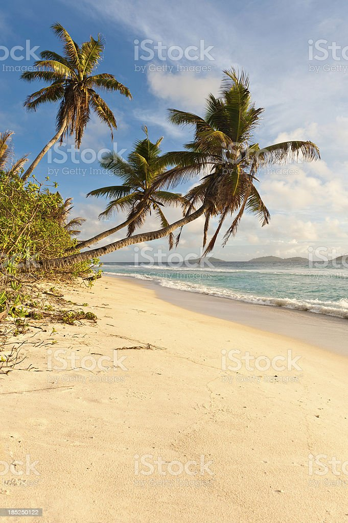 Palm tree beach tranquil desert island shore royalty-free stock photo