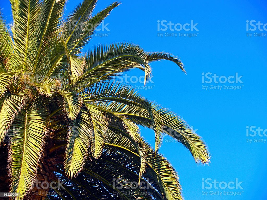 Palm Tree, Blue Sky royalty-free stock photo