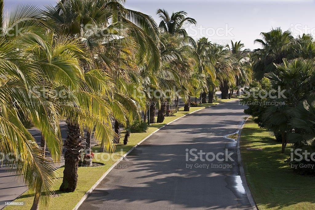 Palm Tree Boulevard royalty-free stock photo