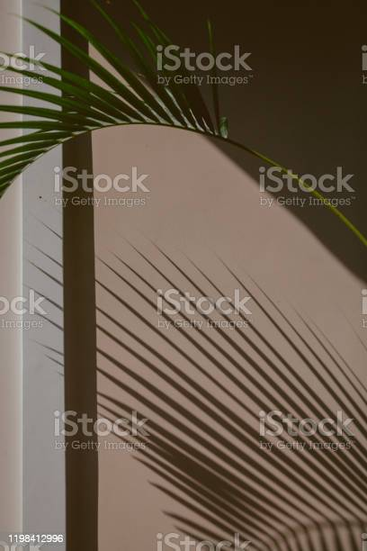 Photo of Palm tree branch on background of corner of  house