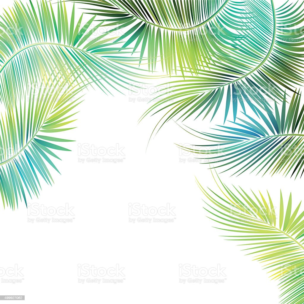 Palm tree branches. stock photo