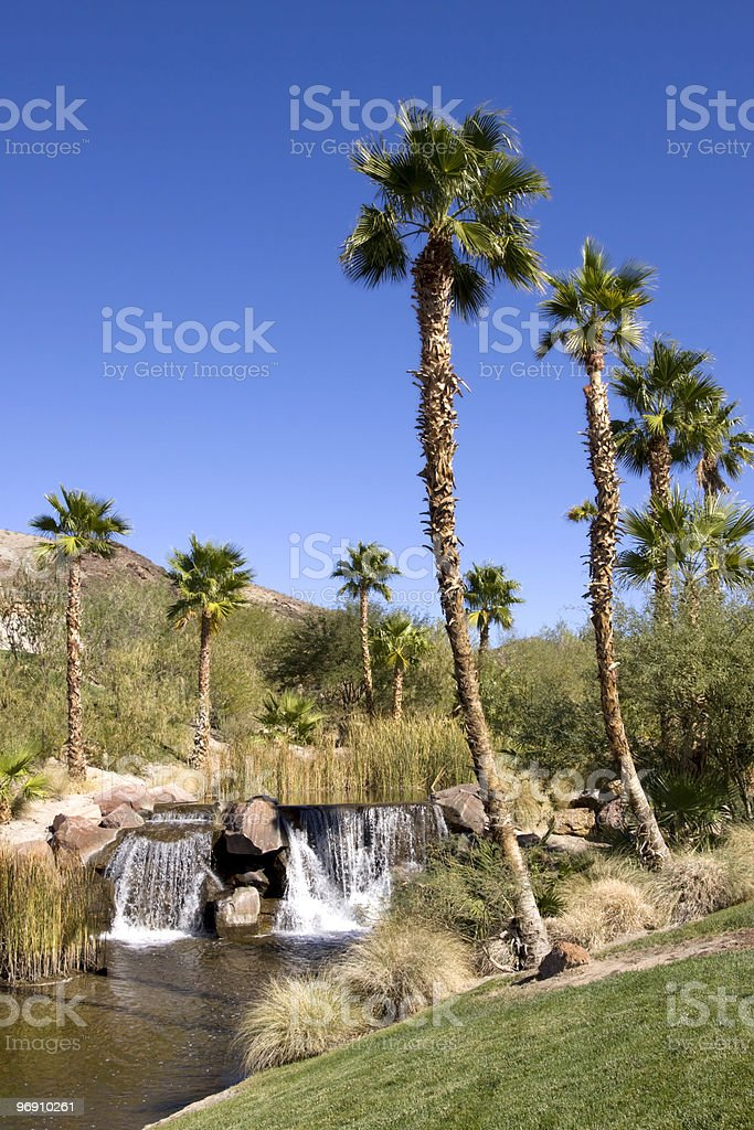 Palm tree by waterfall royalty-free stock photo