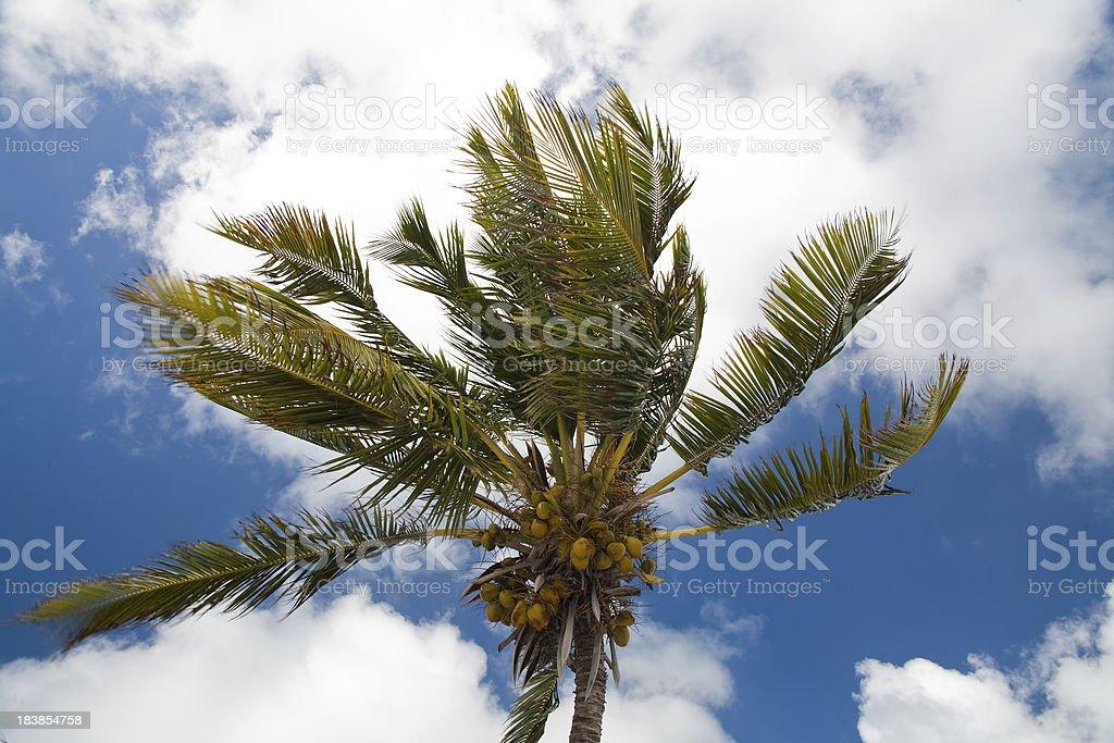 Palm tree closeup royalty-free stock photo
