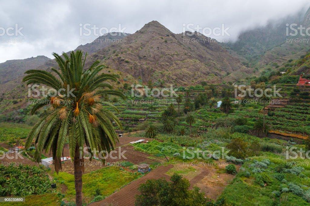 Palm tree cloudy sky mountain valley trekking, Hermigua, La Gomera, Canary Islands stock photo