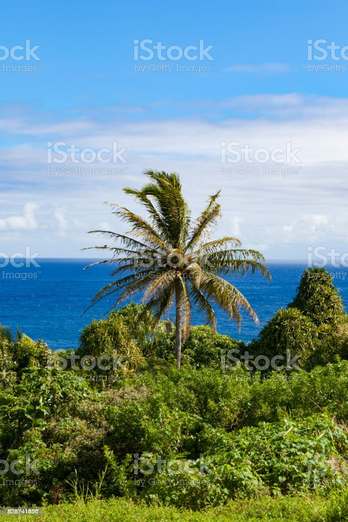 palm tree coastal view stock photo