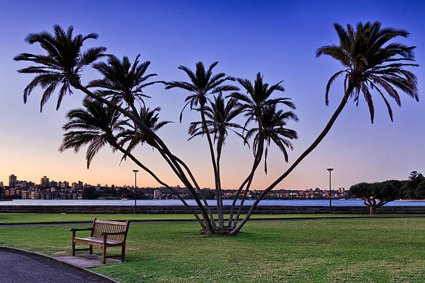 rbg palm tree cove sunset - rbg stok fotoğraflar ve resimler