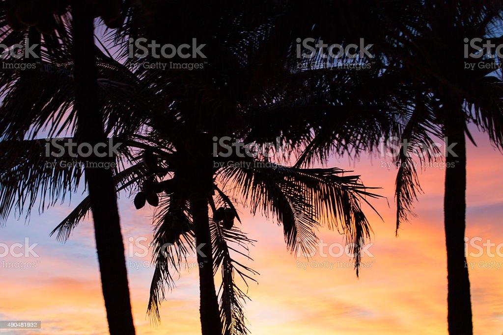 Palm Tree Details stock photo