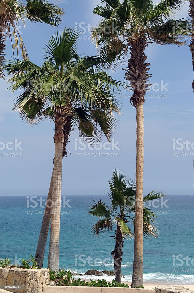 Palm tree family royalty-free stock photo