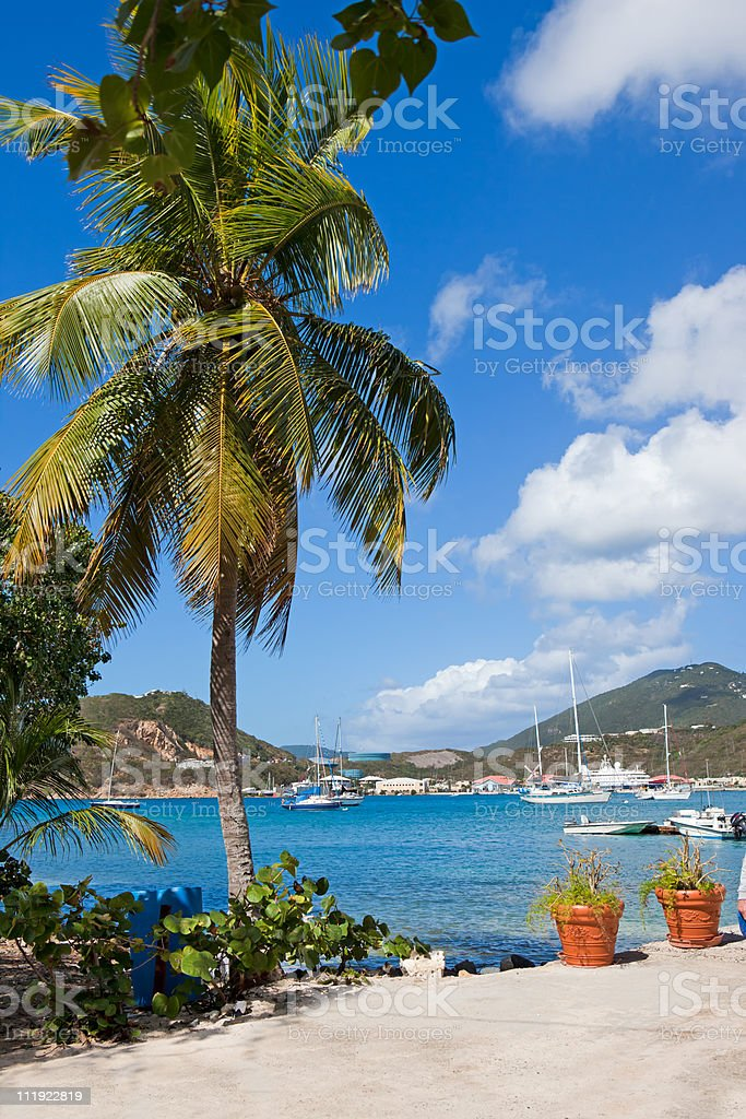 Palm tree frames harbor full of pleasure boats in Caribbean stock photo