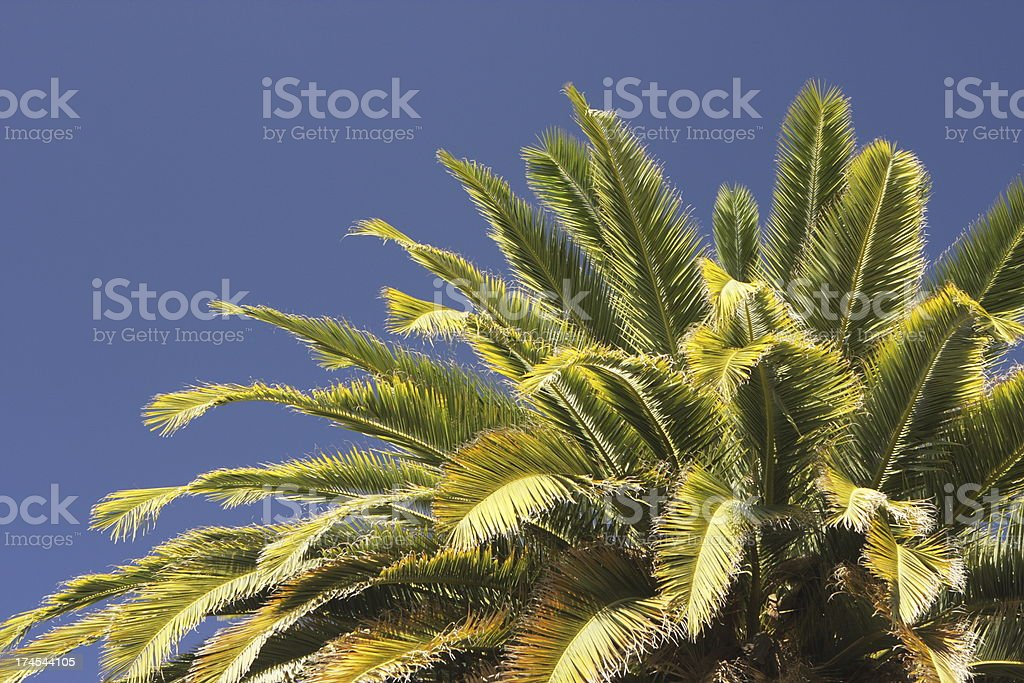 Palm Tree Frond Leaf Tropical Foliage royalty-free stock photo