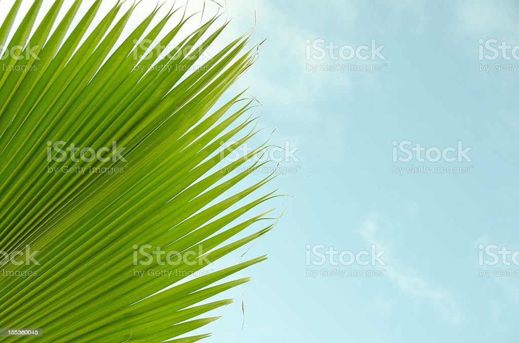 Palm Tree Frond royalty-free stock photo
