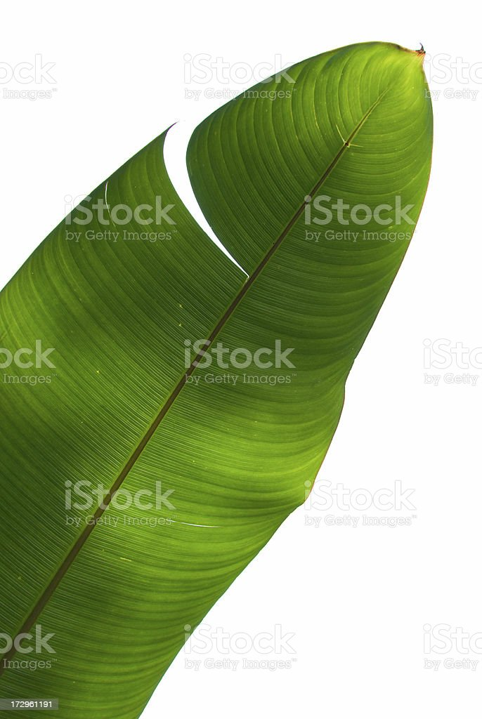 Palm Tree Green Leaf stock photo