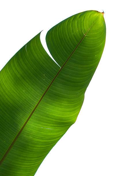 Palm Tree Green Leaf stock photo