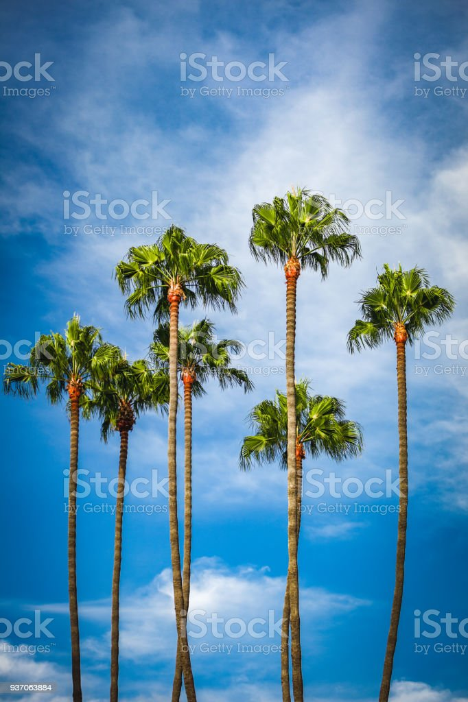 Palm Tree Grove in California stock photo