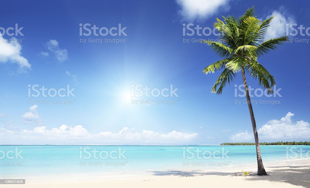 A palm tree grows on a golden beach overlooking a blue sea  royalty-free stock photo