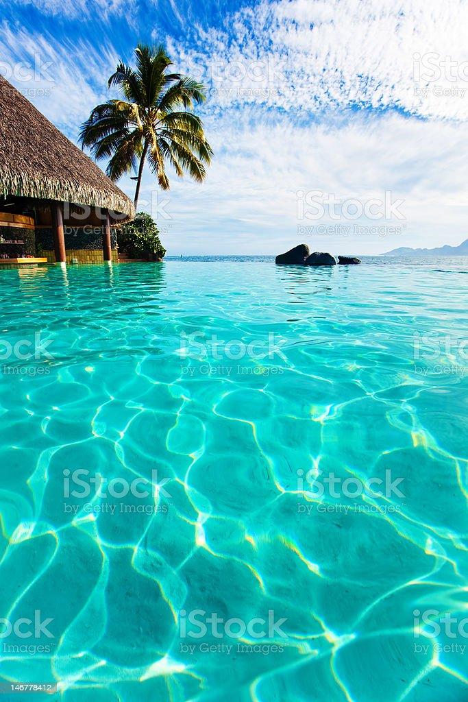 Palm tree hanging over infinity pool royalty-free stock photo