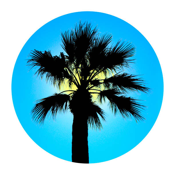 palm tree, icon or logo - tree logo stock photos and pictures