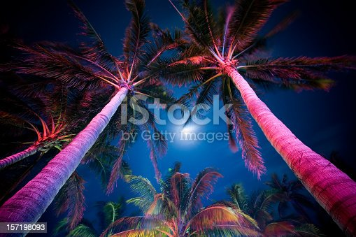 Palm trees at night along Ocean Drive in South Beach, Miami, lit by neon lights under the moon.
