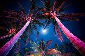 istock Palm Tree Illumination 157198093