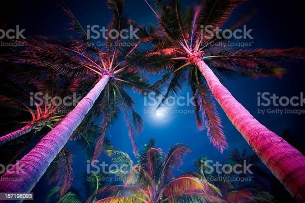 Photo of Palm Tree Illumination