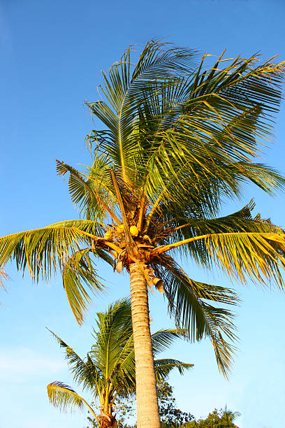 Palm tree in Ang Thong National Marine Park, Thailand stock photo