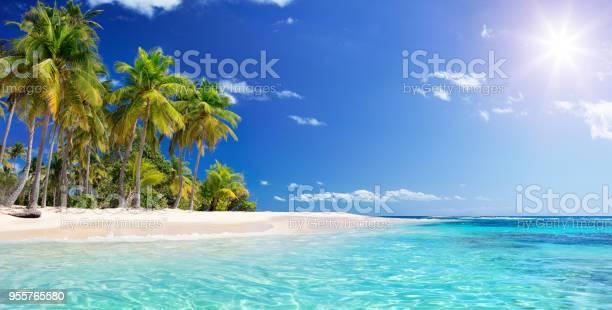 Palm tree in beach in tropical island caribbean guadalupe picture id955765580?b=1&k=6&m=955765580&s=612x612&h=6s3zyiofsy9pzlstu0oru8l1x0zn4g3rzlspog7c0ky=
