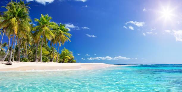 palmeira em praia na ilha tropical - caribe - guadalupe - laguna - fotografias e filmes do acervo