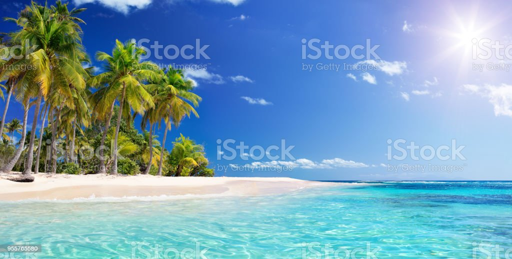 Palm tree In Beach In Tropical Island -  Caribbean - Guadalupe stock photo