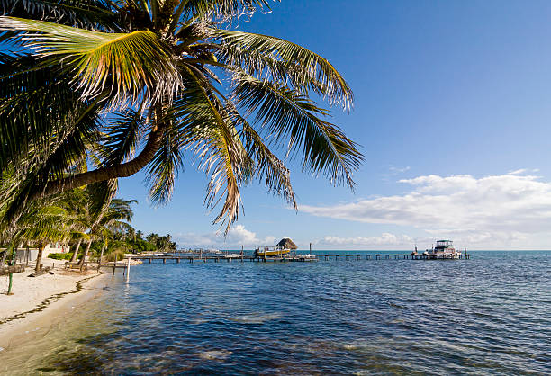 Palm tree in Caye Caulker, Belize stock photo